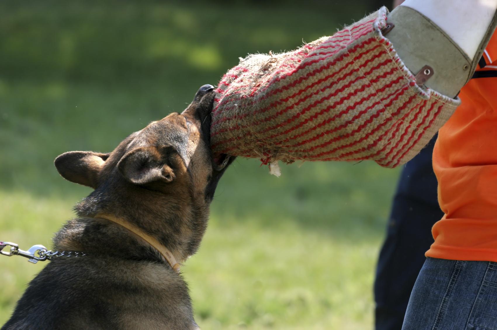 dyncorp paza canina
