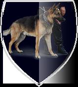 dyncorp-paza-canina